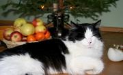 Kass Edvin